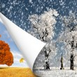 Stock Photo: Autumn and winter
