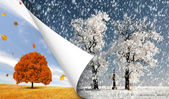 Autumn and winter — Stock Photo