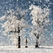 Winter — Stock Photo #14539977