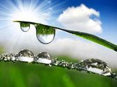 Dew drops — 图库照片