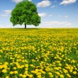 Spring tree — Stock Photo #14540069