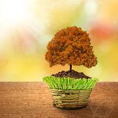 árbol de otoño — Foto de Stock