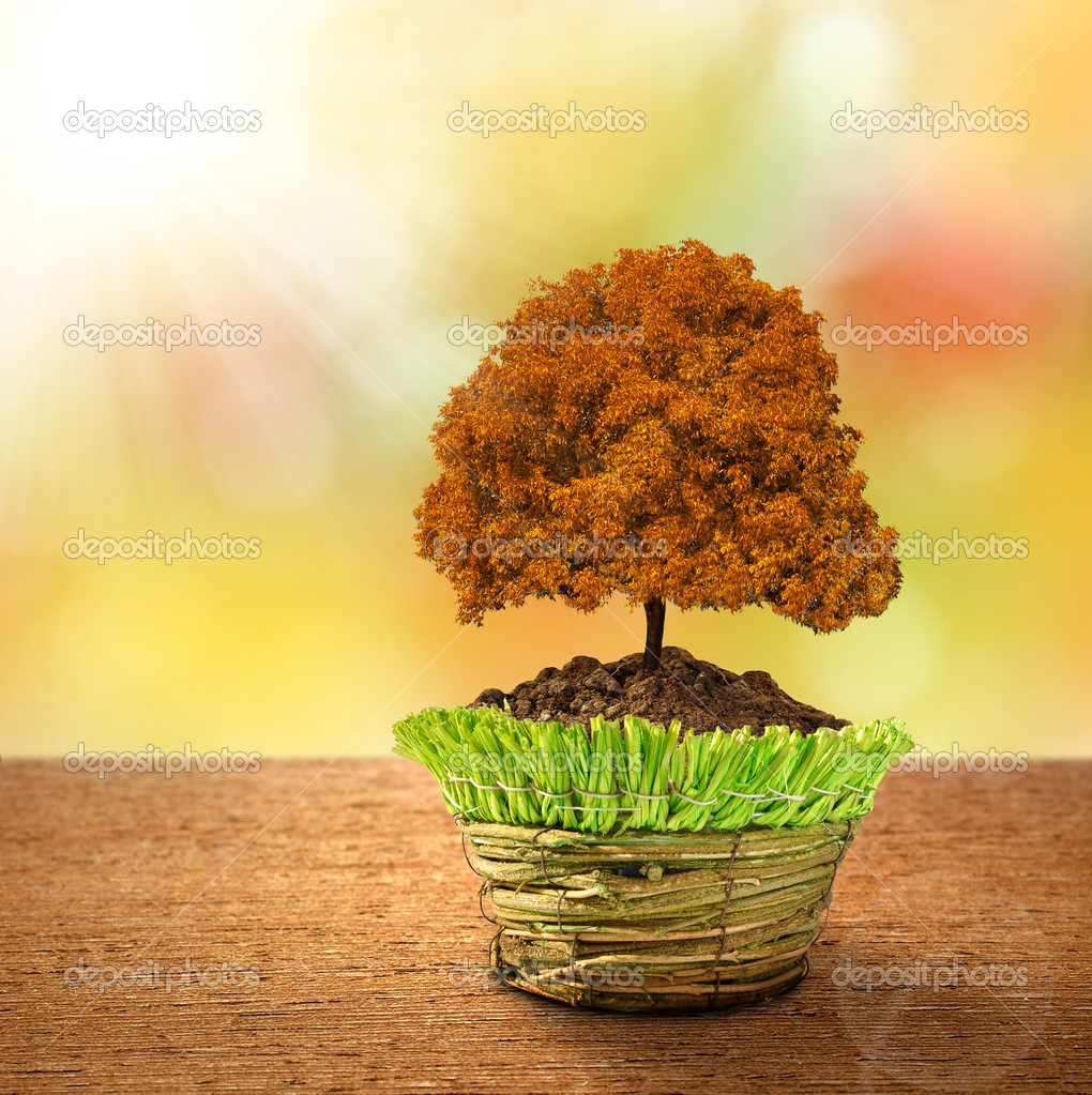 Autumn tree in decorative pot — Stock Photo #14540033