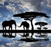 Silhouette elephants — Stock Photo