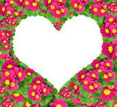 Blume herz — Stockfoto