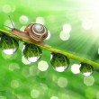 Small Snail — Stock Photo #16310755