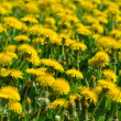 Dandelions — Stock Photo #16311019