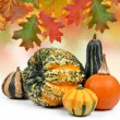 Pumpkins — Stock Photo #16311209