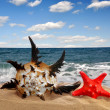 Conch shell with starfish - 