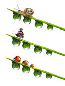 Dew drop with snail,butterfly and ladybugs — Stock Photo