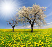 Spring tree — Stock Photo