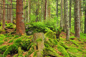Dağ wildwood — Stok fotoğraf