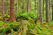 Horské wildwood — Stock fotografie