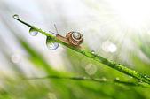 蜗牛上露水的草 — 图库照片
