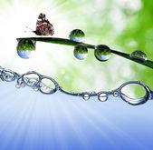 Gocce di rugiada con farfalla — Foto Stock