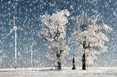 Zimní strom — Stock fotografie