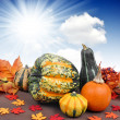 Pumpkins — Stock Photo #17368237