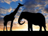 Silhouette elephant with giraffe — Stock Photo