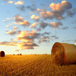 Stock Photo: Straw bales
