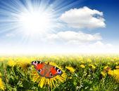 Flores com borboleta — Foto Stock