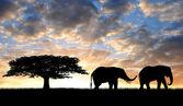 Silhouette two elephants — Stock Photo