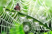 Motýl na trávě s kapkami rosy — Stock fotografie