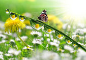Drops and butterfly — Stockfoto