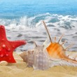 Conch shell with starfish - Stock Photo