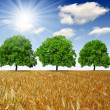 Golden wheat field with trees — Stock Photo #18931327