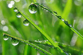 Dew drops — Photo