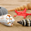 Starfish and shells - Stock Photo