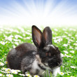 Stock Photo: Cute Rabbit