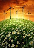 盛开草甸与风 turbinens — 图库照片