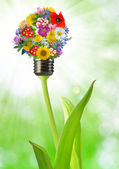Bulb from flowers — Stock Photo