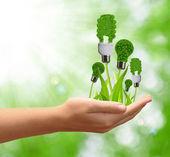 Bulbo de la energía ecológica — Foto de Stock