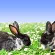 Cute Rabbits - Stock Photo