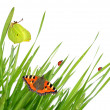 Fresh morning dew with butterflies and ladybugs — Stock Photo