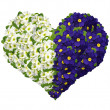 Flower heart - Stockfoto