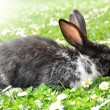 Cute Rabbit - Stock Photo
