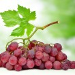 Grapes with leaf — Stock Photo #23556865