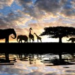 Silhouette elephants with giraffes — Stock Photo