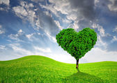 Tree in the shape of heart — Stock Photo