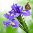 Royalty-Free Stock Photo: Purple iris flower with butterfly