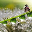Stock Photo: Dew and butterfly