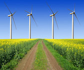 Rapeseed field with wind turbines — Stock Photo