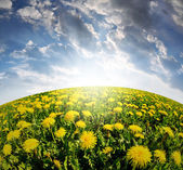 Dandelions on meadow — Stock Photo