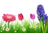 čerstvá jarní tráva s květinami — Stock fotografie