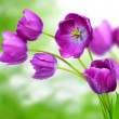 Purple tulips — Stock Photo #25375689