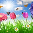 Flower and butterflies - Stock Photo