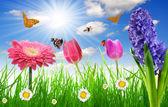 Kwiaty i motyle — Zdjęcie stockowe